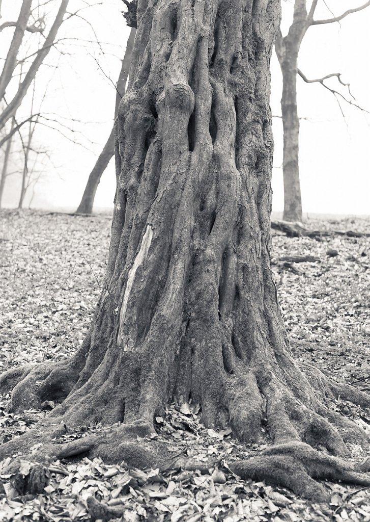 Baum, Studie #1